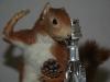 écureuil taxidermie