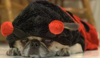 cox chien